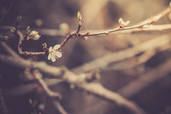 Blossoming flower Royalty Free Stock Photography