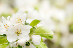 Blossoming flower in spring Stock Images