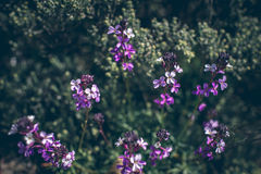 Blossoming flower in spring with very shallow focus Stock Images