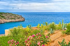 Blossoming flowerbed on a background of sea landscape, Greece. Landscape with a blossoming flowerbed on a background of sea landscape, the island of Crete royalty free stock images