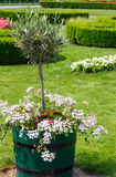 Blossoming flowerbed in summer city park. Royalty Free Stock Images