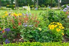 Blossoming flowerbeds стоковые изображения rf