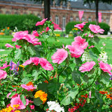 Blossoming flowerbeds Stock Photos