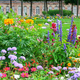 Blossoming flowerbeds Stock Images