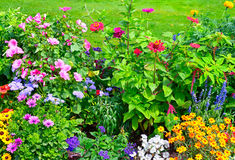 Blossoming flowerbeds. In the park royalty free stock images