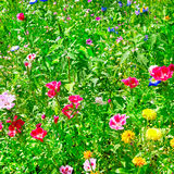 Blossoming flowerbeds Royalty Free Stock Photography