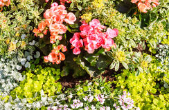 Blossoming flowerbeds in the park Royalty Free Stock Photo