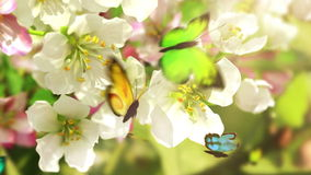 Blossoming flowers and butterflies, stock footage
