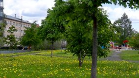 Blossoming flowers in city park panorama stock video footage