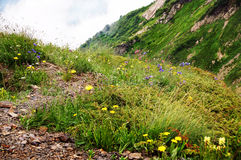 Blossoming flowers and road at mountain top. Summer in mountains Stock Photos