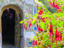 Blossoming Fuchsia against an Little Chapel, Guernsey Island, Channel Islands Royalty Free Stock Photo