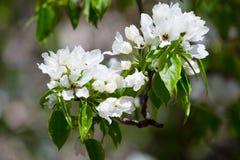 Blossoming garden Stock Photos