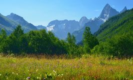 Blossoming glade. This is blossoming glade in Caucasus mountains in summer royalty free stock photos
