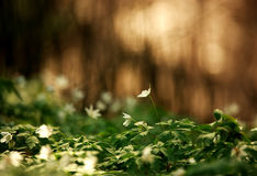 Blossoming glade of flowers in green spring forest in sunlight Royalty Free Stock Images