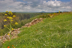 Blossoming Golan heights Stock Image
