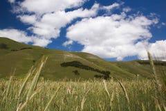 THE BLOSSOMING OF GRAND PLANE OF CASTELLUCCIO DI NORCIA Stock Images