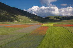 THE BLOSSOMING OF GRAND PLANE OF CASTELLUCCIO DI NORCIA Royalty Free Stock Images