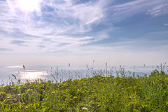 Blossoming grasses in front of ocean Royalty Free Stock Image