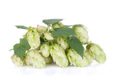 Blossoming hop with leaves Stock Photo