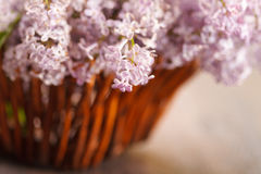 Blossoming lilac in a basket Royalty Free Stock Photography
