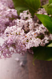 Blossoming lilac in a basket Stock Photos