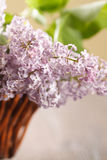 Blossoming lilac in a basket Royalty Free Stock Images