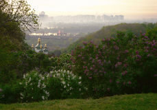 Blossoming lilac in a botanical garden. View from the blossoming botanical garden at Orthodox church and the morning Kiev Royalty Free Stock Photos