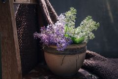 The blossoming lilac branches in clay a pot on the old wooden chair covered woolen a handmade plaid, close up royalty free stock image