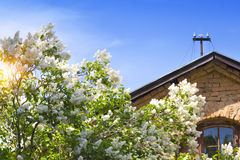 The blossoming lilac at a country house Stock Photos