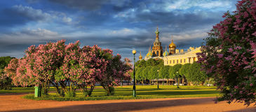 The blossoming lilac on the Field of Mars in St. Petersburg Royalty Free Stock Photography