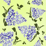 Blossoming lilac  on yellow background.  Lilac branch  flower drawing, illustration. Blossoming lilac  on yellow  background. Spring lilac. Lilac branch  flower royalty free illustration