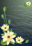 Blossoming lilies. Vector illustration - a pond with fine blossoming lilies Royalty Free Stock Photos