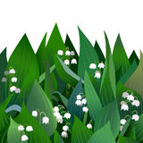Blossoming lilies of the valley flowers and leaves.  Stock Photo
