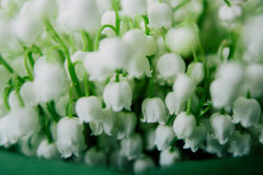 Blossoming lily of the valley in the forest. Lily-of-the-valley. Convallaria majalis.Spring background. Floral background.Selectiv Royalty Free Stock Image