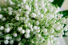 Blossoming lily of the valley in the forest. Lily-of-the-valley. Convallaria majalis.Spring background. Floral background.Selectiv Stock Images