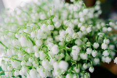 Blossoming lily of the valley in the forest. Lily-of-the-valley. Convallaria majalis.Spring background. Floral background.Selectiv Royalty Free Stock Images