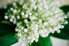 Blossoming lily of the valley in the forest. Lily-of-the-valley. Convallaria majalis.Spring background. Floral background.Selectiv Stock Photography