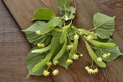 Blossoming linden branch Royalty Free Stock Photo