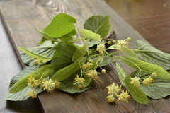 Blossoming linden branch Stock Photo