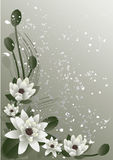 Blossoming Lotus Royalty Free Stock Photos