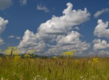 Blossoming meadow and the cloudy sky Royalty Free Stock Image