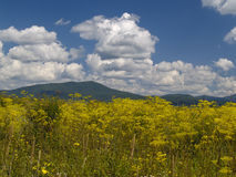 Blossoming meadow and the cloudy sky Stock Photos
