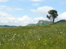 The blossoming meadows on slopes of hills. Royalty Free Stock Image