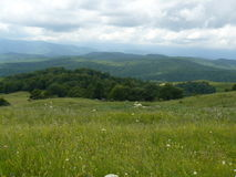 The blossoming meadows on slopes of hills. Royalty Free Stock Images