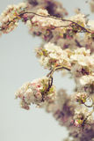 Blossoming new leaves and flowers in faded saturated pastel tone Royalty Free Stock Photography