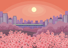 Blossoming Oriental cherry and city Royalty Free Stock Photos