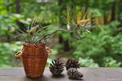 Blossoming Pine-tree Stock Photo