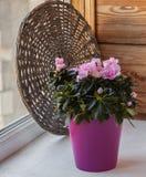 Blossoming pink azaleas on  window Stock Photos