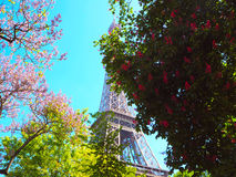 Blossoming pink chestnut tree, magnolias, pink flowering bushes and Eiffel tower on background. Stock Images