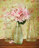 Blossoming pink hydrangea in bottle Royalty Free Stock Photo